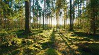jenis Hutan